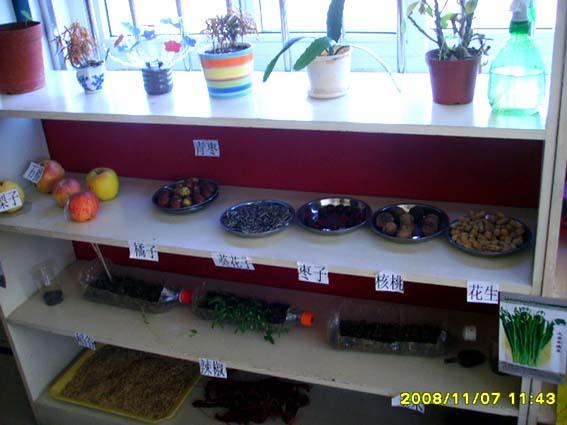 幼儿园活动区布置:植物区-区角环境布置-图片- 资源