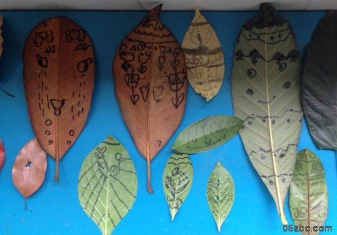 我们一起在枇杷树叶,玉兰树叶,桂花树叶,橘子树叶,梧桐树叶,银杏树叶