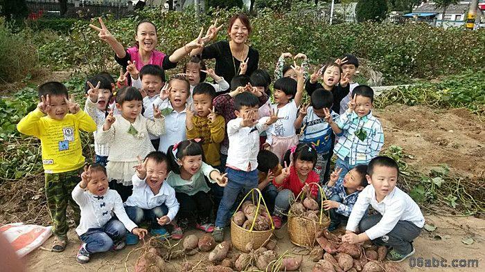 一路上,孩子们有说有唱的,还看到了黄色的落叶,深刻的感知了大自然的季节变化。在边走边看中,不知不觉就来到了番薯地。我们请农民伯伯给我们讲解了如何挖番薯,最后老师也仔细交代了挖番薯事宜,一声令下,所有的孩子们拿着铲子开始了挖番薯活动。忙碌地在田地里中穿梭,有的孩子大声地叫起来:老师我找到番薯了,老师我找到的番薯像一个大冬瓜等等的话语。有些孩子独自挖番薯,有些孩子合作着一起挖番薯。不一会一片番薯地被孩子们挖的一个光景,各个提着一大袋番薯,脸上流露着喜悦的心情,开心不已。