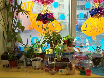 幼儿园环境布置:自然角3