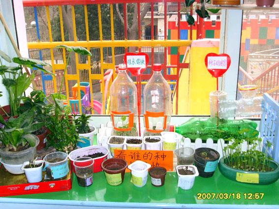 幼儿园环境布置:自然角20