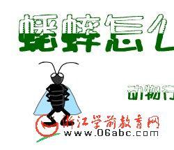 科学常识FLASH:蟋蟀怎么跑啦?
