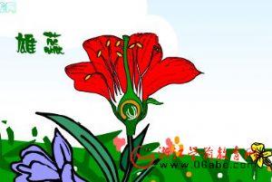 科学课件FLASH:美丽的花朵(花的结构)