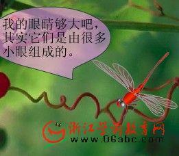 幼儿科学常识课件:蜻蜓的大眼睛(复眼)