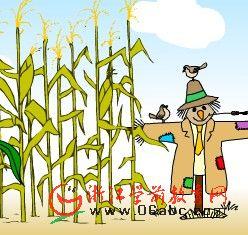 幼儿科学常识课件:玉米杆里的秘密(草本)