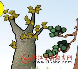 幼儿科学常识课件:落叶树和常绿树