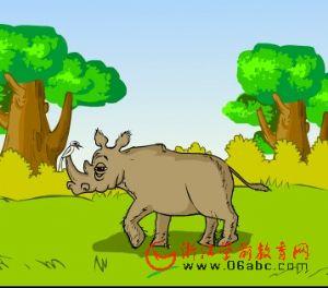 儿童科学常识课件:犀牛与犀牛鸟
