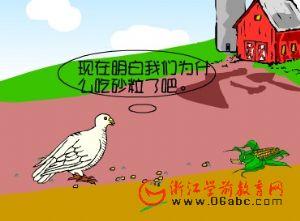 儿童科学课件:鸟为什么爱吃沙粒