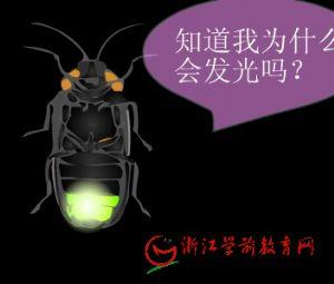 儿童科学课件:会发光的生物