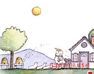 儿童绘本故事FLASH:白鸽少年