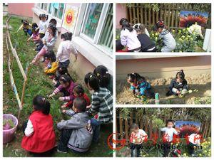 耕耘 收获―江南幼儿园开展种植成果丰收体验活动