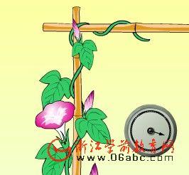 幼儿园科学常识课件:死缠别人的植物――攀援茎和缠绕茎